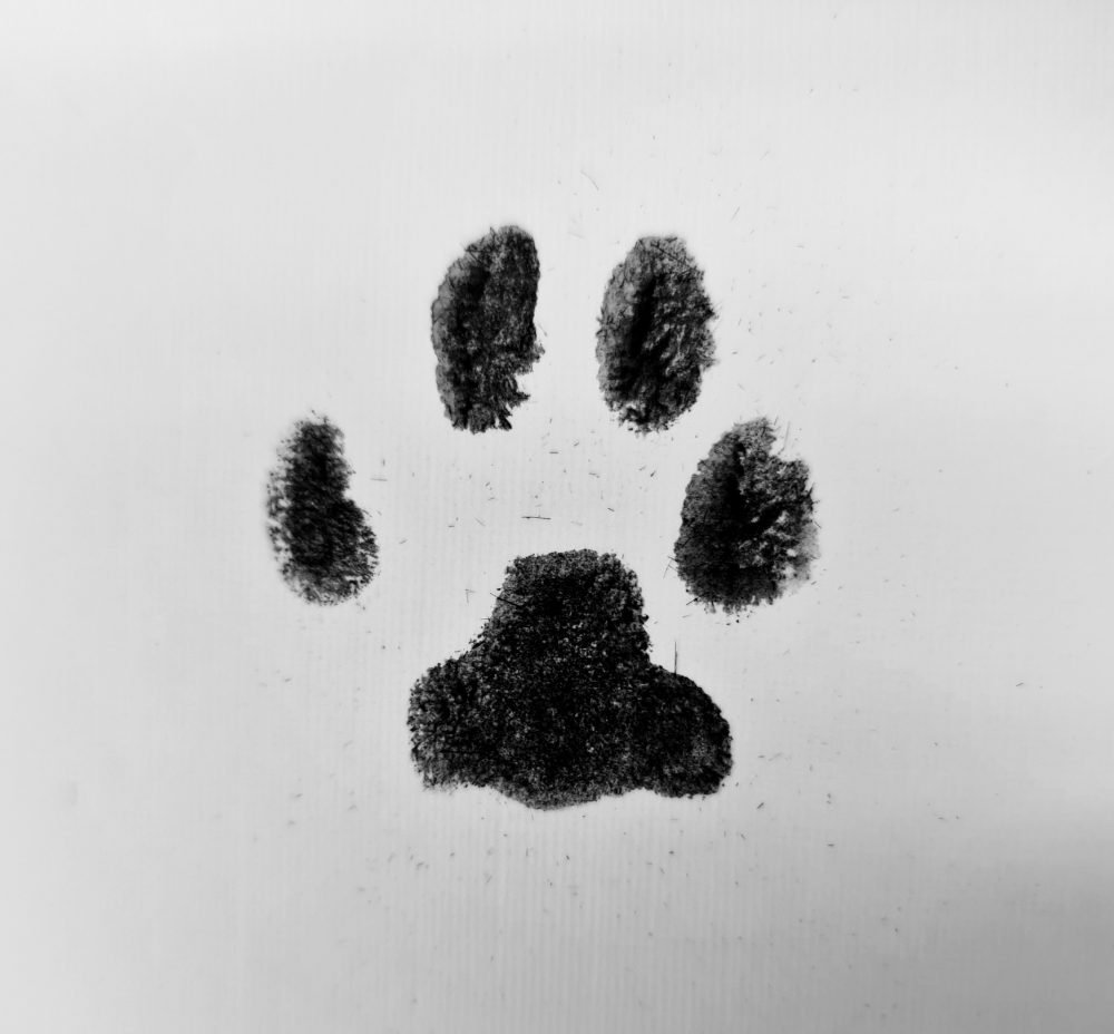 paw print impression cat cremation